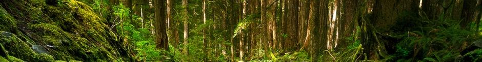 banner_wood_1150x150