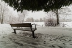 Peaceful walk along Como Lake in Coquitlam. Nice bench view from underneath the tree. Want to have a sit?