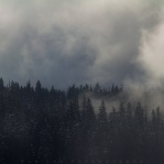 Morning fog above tree line taken at Cypress Mountain. Have a great day!