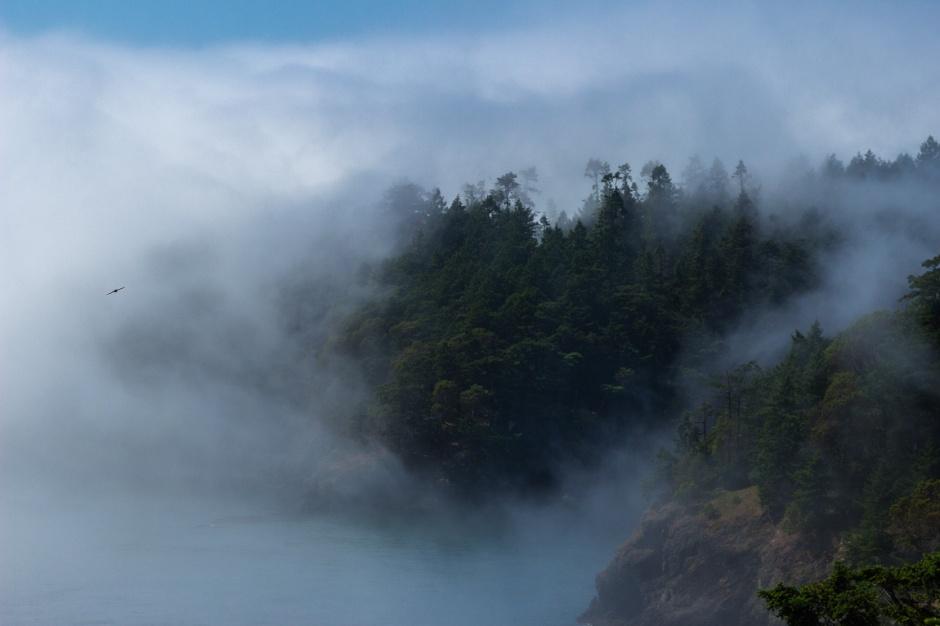 Freedom Mist
