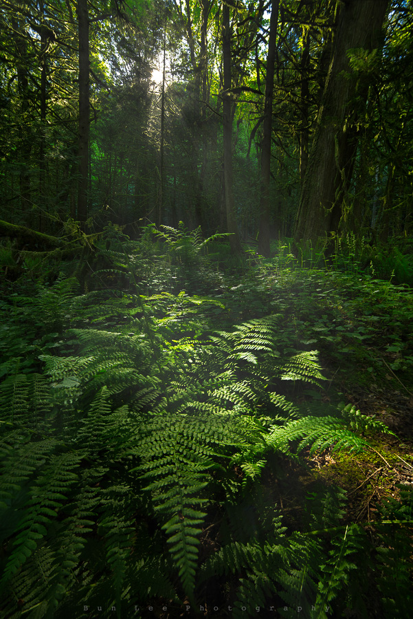 The World Of Ferns