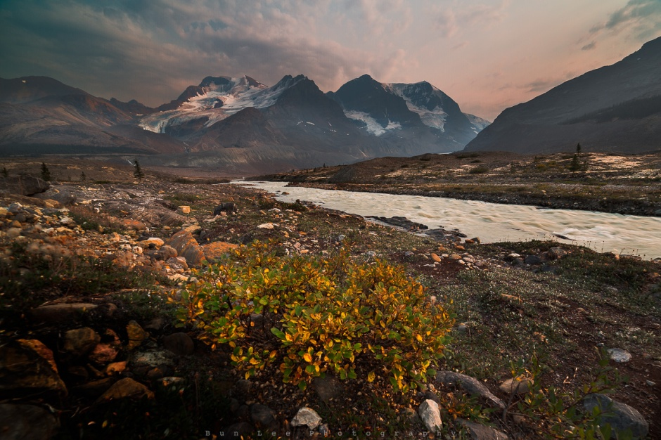 Athabasca Beauty
